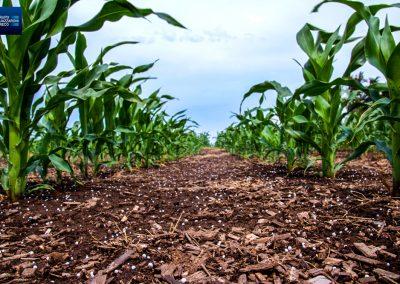 Aplicación de fertilizantes