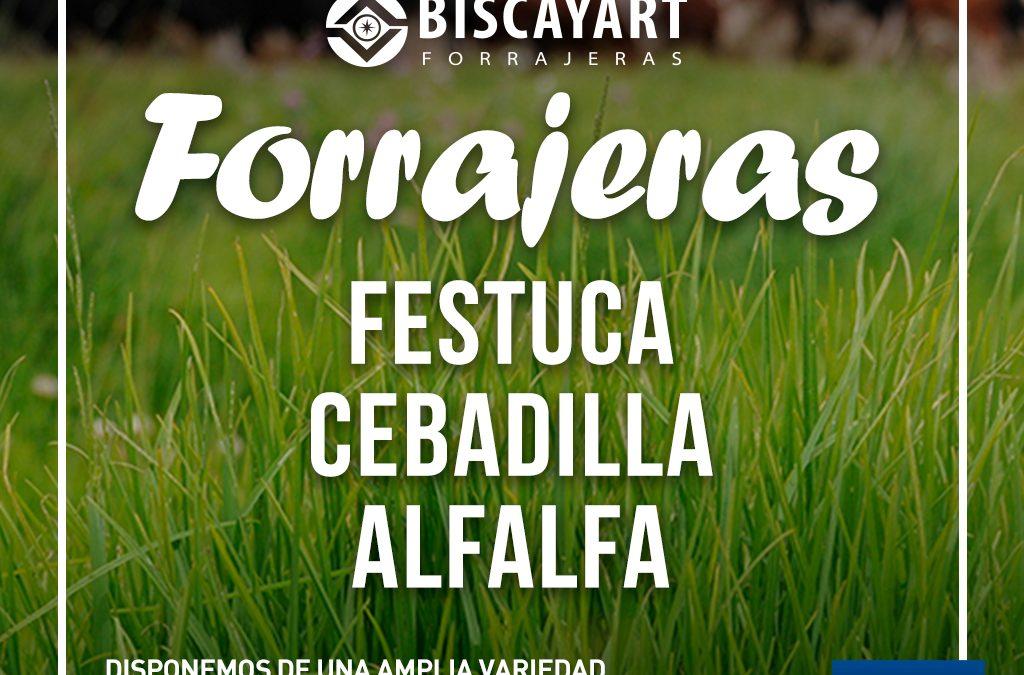 Semillas forrajeras Biscayart