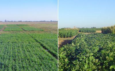 Secuencias de cultivos forrajeros anuales como complemento de las pasturas perennes templadas