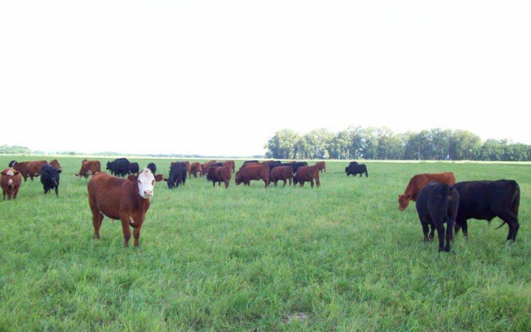 Recría pastoril. Costo de producción de carne