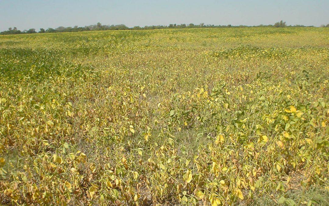 Siembra de pasturas en suelos degradados por agricultura no conservacionista